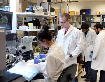 Students in the Herzog lab